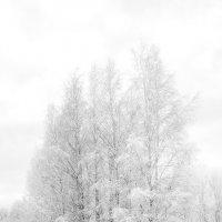 Серебристый убор :: Gennadiy Karasev