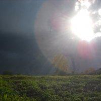 А вот и солнышко :: Александр Попков