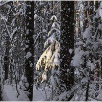 Лучик солнца в зимнем лесу. :: Любовь Чунарёва