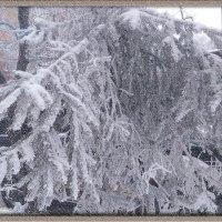 Снежный вечер :: Elena
