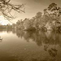 Лесное озеро :: Дмитрий Сорокин
