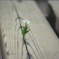 Одинокий цветок. :: Victoria Efanova