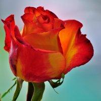 подарок Любимого фотограф и мужчины :: Светлана .