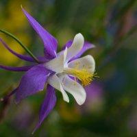 цветок :: Дмитрий Мосин