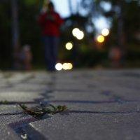 ночь, улица... :: Лена Булгакова