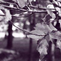 Осень :: Natali B