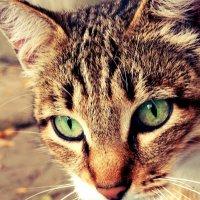 кошка :: Александра Хитрук