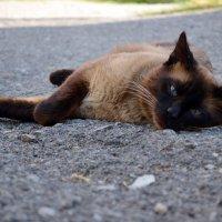 Cat :: Віта Орнатовська
