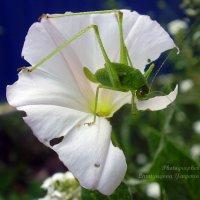 Поедатель цветов :: Евгения Ламтюгова