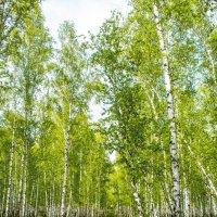 Дорога в лес :: юрий Амосов