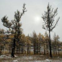 2-е в лесу :: Сергей Атлашкин