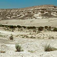 Пустыня Нэгэв :: Lidiya Dmitrieva