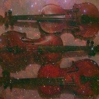 violin`s :: Lady Etoile