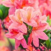 цветы :: Юлия Бокова