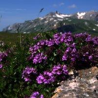 Цветы на фоне г.Оштен :: Владимир Лебедев