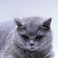 Кот Алисы :: Alisa Kolesova