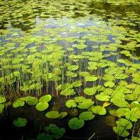 Озеро :: Дмитрий Арсеньев