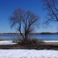Ильмень-озеро :: Елена Назарова