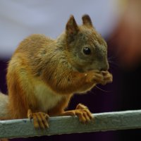 А орешки не простые!!!! :: Александр Макаров
