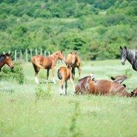 Лошади на пастбище :: Бруно Преэс