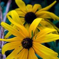 цветы :: Катя Гураль