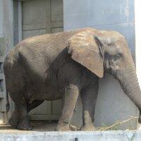 слон :: elena nebo