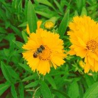 Пчелка на цветочке :: Виктория Горюн
