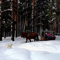 зимний лес :: Polina