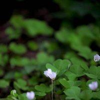 Лесной полумрак :: Елена Богос