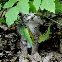 Я спрятался! :: Анастасия Е