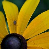 Желтое :: Анастасия Е