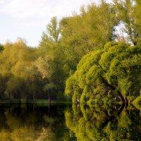 Парк дендрарий Е-бург :: Сергей Угренев