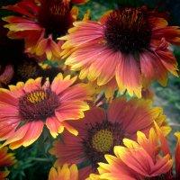 Цветы :: Снежанна Ключик