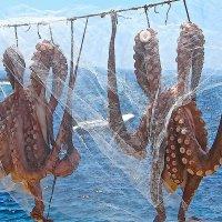 вуаль :: сергей плужник