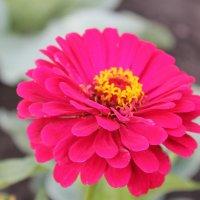цветочек :: Мария Кудрина