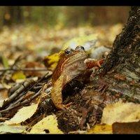 Встреча в лесу. :: Елена Kазак