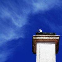 История одной чайки :: Максим Камышлов