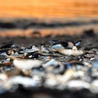 Белое море. :: Ирина Исаева