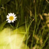 цветок :: Андрей Ракита