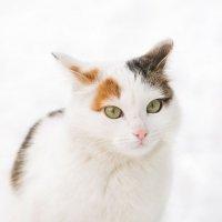 Кошка :: Diakonov Maxim