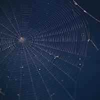 паук :: Андрей Ракита