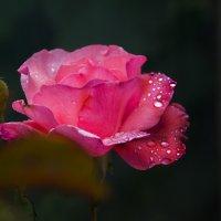 после дождя :: Андрей Ракита