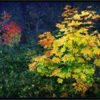 В темно-синем лесу... :: Игорь Шербаков