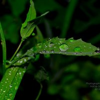 после дождя :: Nataly Egorova