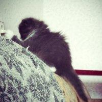 Котик-электрик :: Nastasya Melanich