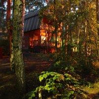 Лесной теремок :: Альбина Хамидова