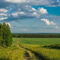 Дорога к лесу :: Григорий Храмов