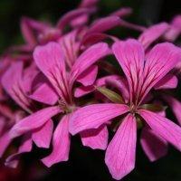 цветы :: Владимир и Тина Рябоненко