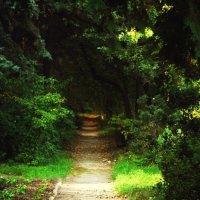 Forest road :: Анна Мысочка