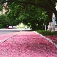 Pink road :: Анна Мысочка